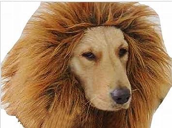 Grande Mascota Perro Cosplay Disfraces Pelucas melena Cabello León (Caqui)