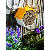 Evergreen Garden Busy Bee Hexagonal House - 8 x 4 x 7 Inches Eco Friendly Insect Habitat for Outdoor Garden or Yard