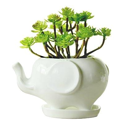 Youfui Cute Succulent Planter Animal Shaped Flower Pot Decor for Home Office Desk (Elephant L): Garden & Outdoor