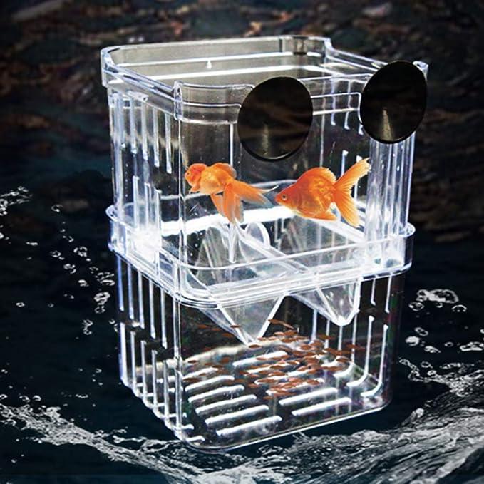 quanjucheer - Caja de plástico Transparente para aislar la cría de ...