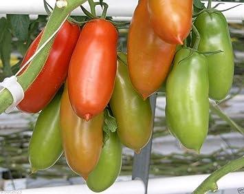 San Marzano Tomaten Bekannt Als Die Größten Sauce Tomaten In Der