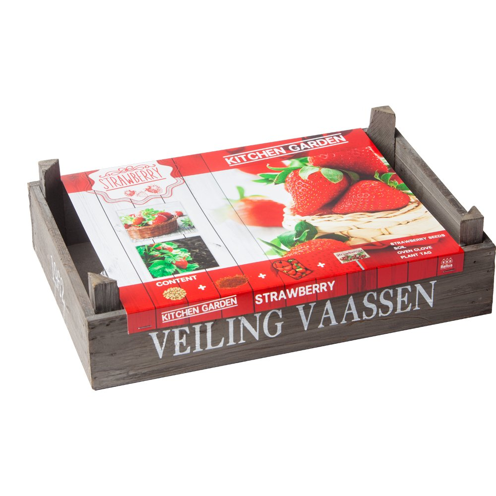 geschenkartikel-shopping Kitchen Garten Strawberry Erdbeeren Pflanz-Set Samen Saatgut Garten-Set Geschenkidee notrash2003®
