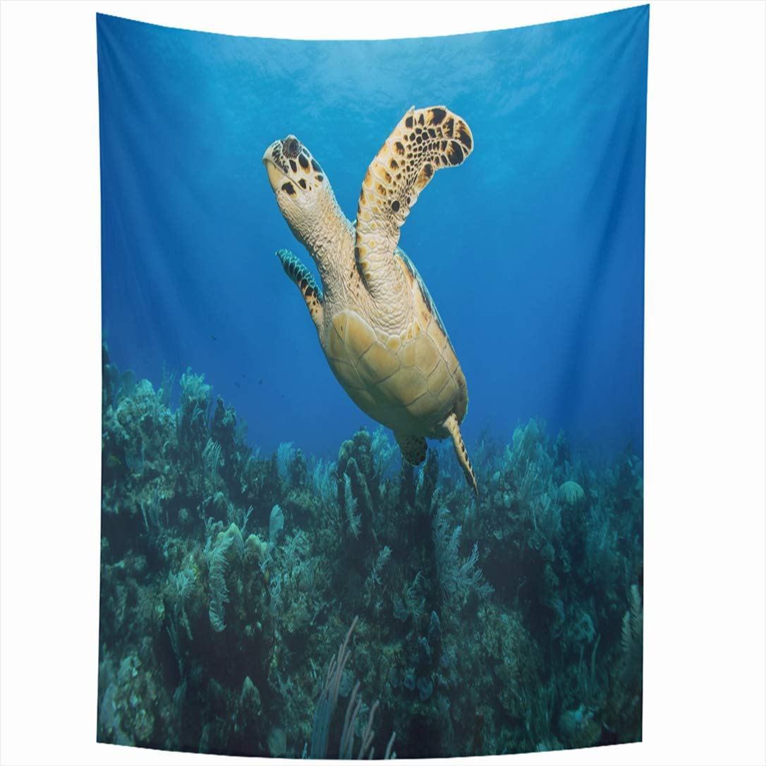 Ahawoso Tapestry 60x90 Inch Blue Aquarium Scuba Hawksbill Sea Turtle Swimming Above Coral Animals Wildlife Mexico Nature Active Activity Tapestries Wall Hanging Home Decor Living Room Bedroom Dorm by Ahawoso