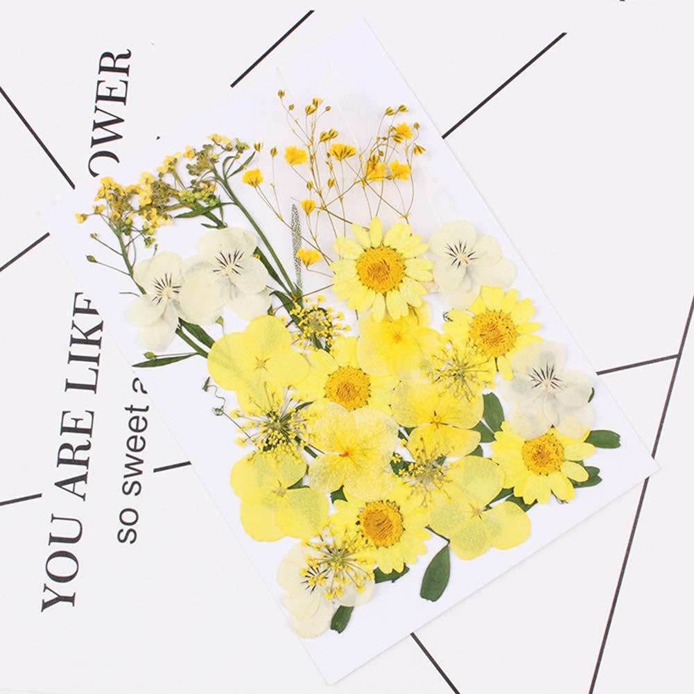 artesan/ía org/ánica Natural prensada Flor Seca 0Miaxudh A decoraci/ón de Flores secas
