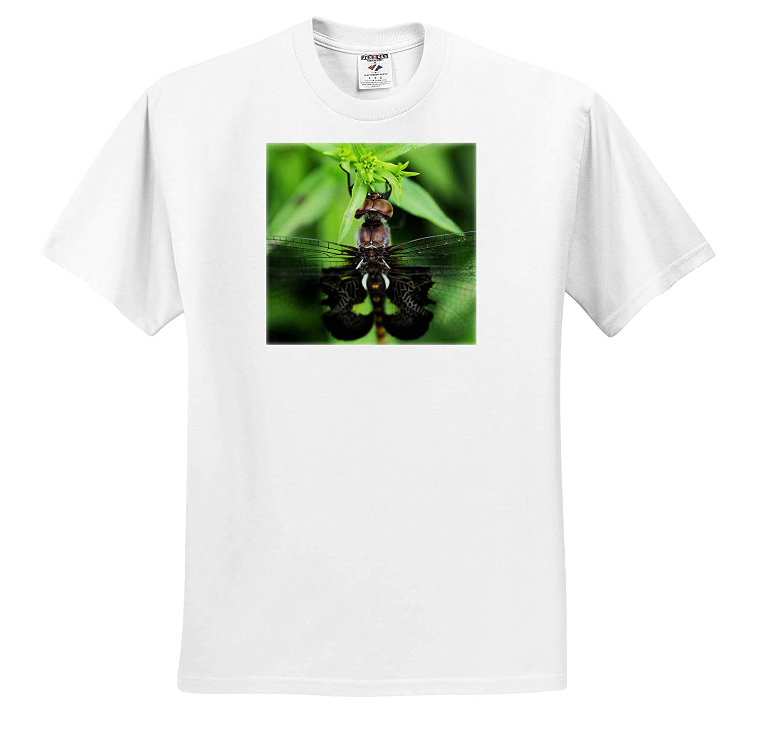ts/_316750 Macro Photograph of The Eyes of a Black Saddlebags Dragonfly 3dRose Stamp City - Adult T-Shirt XL Insects
