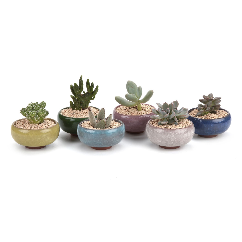 T4U 2.5 Inch Ceramic Ice Crack Zisha Serial Succulent Plant Pot/Cactus Plant Pot Flower Pot/Container/Planter Full Colors Package 1 Pack of 6 by T4U