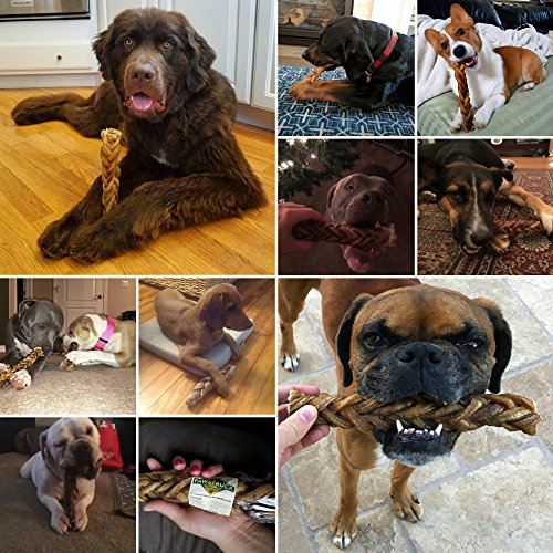 """Pawstruck 9"""" Monster Braided Bully Stick for Dogs (8 Pieces in a Stick!) Natural Low-Odor Jumbo Dog Dental Treats, Best XL Thick Pizzle Chew Stix, 9 Inch"""
