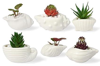 Amazoncom Vanenjoy Cute Ocean White Seashell Succulent Pots Conch