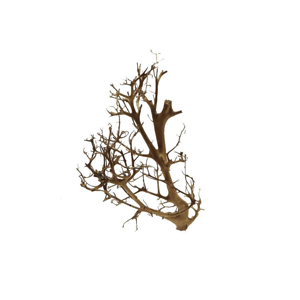 tantora Driftwood bois flotté Bonsaï Aquarium pour crevettes et crustacés Convient