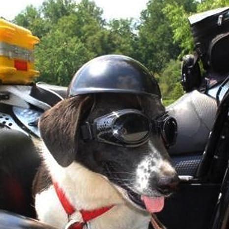 Geekbuzz casco de perro gorro de mascota motero motocicleta conducción deportes perro cachorro protección Cap.: Amazon.es: Productos para mascotas