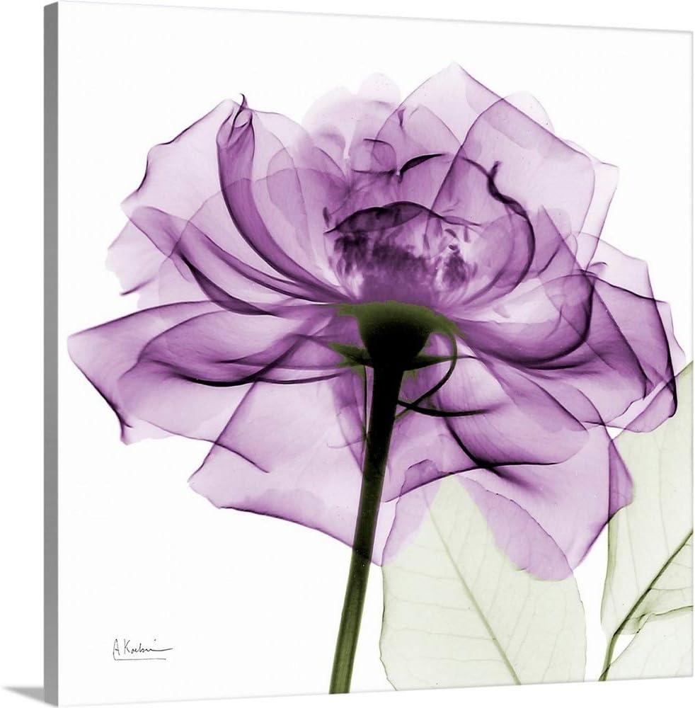 Amazon Com Purple Rose X Ray Photograph Canvas Wall Art Print Rose Artwork Posters Prints