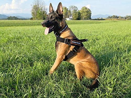 DINGO GEAR Arnés Multifuncional para Perro en el Trabajo ...