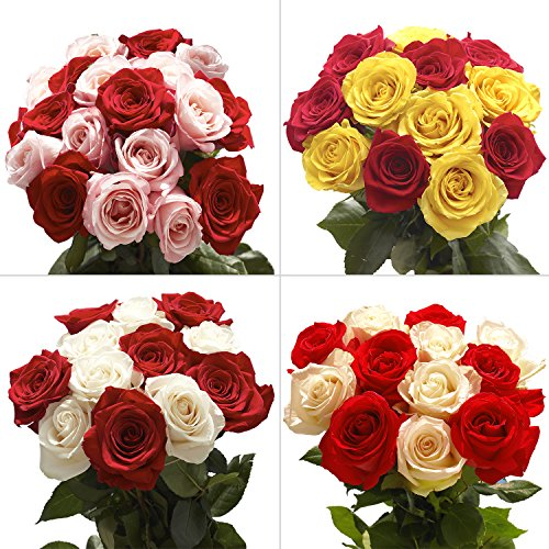 50-fresh-cut-25-red-25-color-roses-fresh-flowers-express-delivery-perfect-gift-for-birthday-annivers