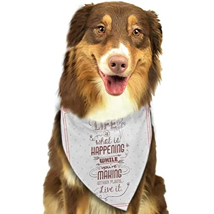Amazon.com : Cute pet Scarf Quotes Life is What is Happening ...