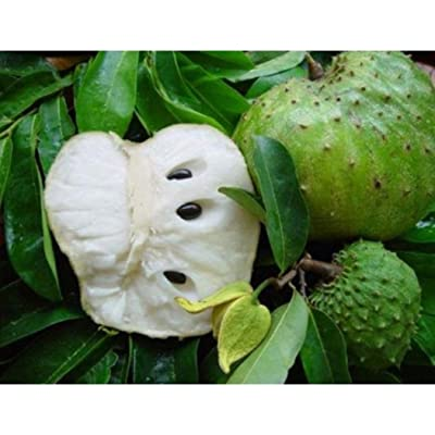HOTUEEN Sedds Soursop Graviola Guanabana Annona muricata Seeds Home Garden Plants 50 pcs Fruits : Garden & Outdoor
