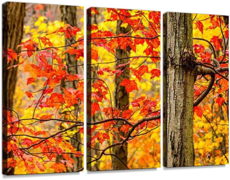 Amazon Com Colorful Autumn Leaves Print On Canvas Wall Artwork Modern Photography Home Decor Unique Pattern Stretched And Framed 3 Piece No Frame Posters Prints