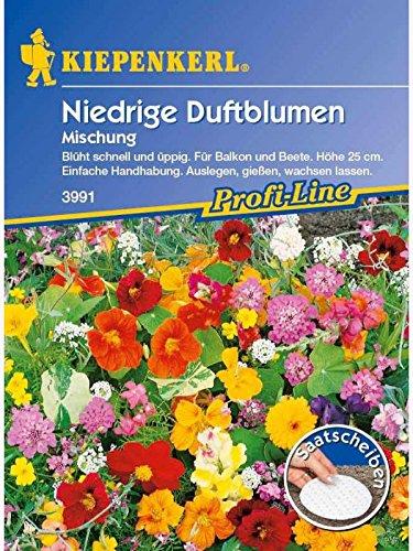 Niedrige Duftblumenmischung Duftender Steingarten Saatscheiben