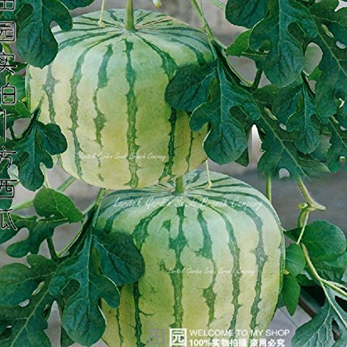 2018 Hot Sale Big Red Sweet Square Watermelon Heirloom Seeds, Professional Pack, 50 Seeds/Pack, 15% Sugar Juicy Foursquare Water Melon
