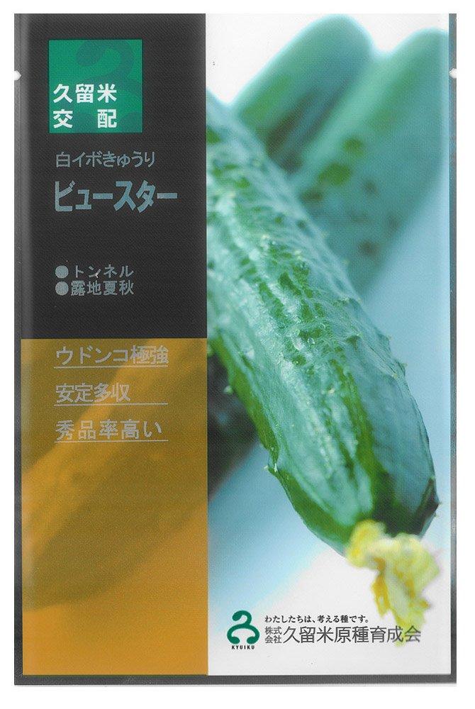 久育種苗 ビュースター(きゅうり) 350粒詰 [久留米原種育成会] B012A6LPHI
