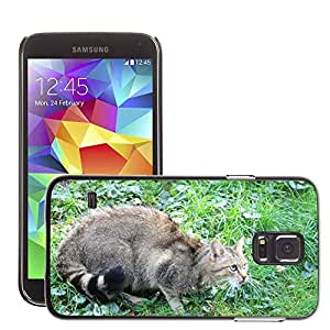 Etui Housse Coque de Protection Cover Rigide pour // M00130626 Wildcat Animal Mamífero Atención // Samsung Galaxy S5 S V SV i9600 (Not Fits S5 ACTIVE)