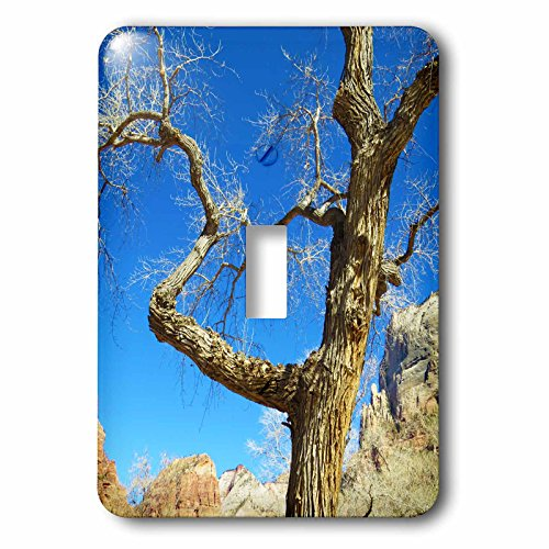 Jos Fauxtographee- Barren Tree - A tree with no leaves in the winter in Zion at the Grotto Trail - Light Switch Covers - single toggle switch - Outlets At Zion