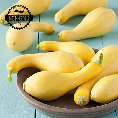 Gaea's Blessing Seeds - Organic Crookneck Yellow Squash Seeds (30 Seeds) Non-GMO Heirloom Early Summer Squash 90% Germination Rate : Garden & Outdoor