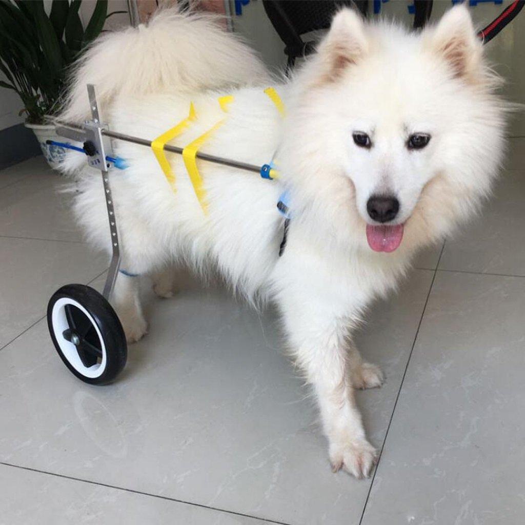 KXBYMX Silla de Ruedas para Perros/Scooter para Perros/extremidades posteriores Silla de Ruedas para discapacitados/Coche de Entrenamiento para ...