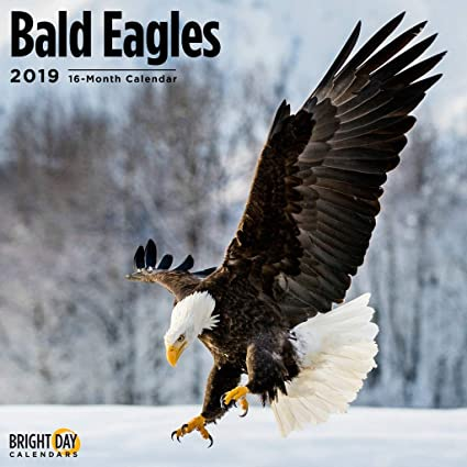 Eagles Calendar 2019 Amazon.: Bald Eagles 2019 16 Month Wall Calendar 12 x 12
