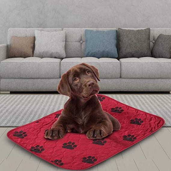 Fdit Socialme-EU Alfombrilla de Riegue Reutilizable Impermeable de Orina de Cama de Cojín de PIS para Gatos de Perros de Animal Doméstico(40 * 60cm-Rojo): ...