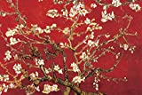 Laminated Almond Blossom - Red Poster by Vincent van Gogh 36 x 24in