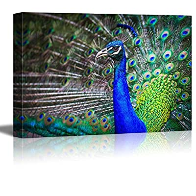 Close up Portrait of Beautiful Peacock with Feathers Out Home Deoration Wall Decor, That's 100% USA Made, Magnificent Composition