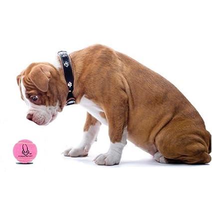Amazon.com : Mini Tennis Balls for Dogs Exercise, Training Grade A rubber non toxic : Pet Supplies