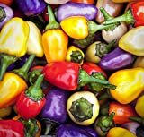 30+ ORGANICALLY GROWN Chinese 5 Five-Color Sweet Pepper Seeds, Heirloom NON-GMO, Super Prolific, Rare, Ornamental and Decorative! From USA