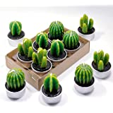 Cactus Tealight Candles Handmade Delicate Succulent Tea Light For Home Birthday Party Wedding Decor 6 Pcs