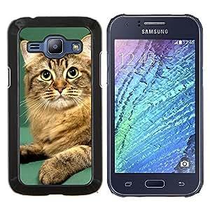 YiPhone /// Prima de resorte delgada de la cubierta del caso de Shell Armor - Naranja británica Curl Bobtail Manx Cat - Samsung Galaxy J1 J100