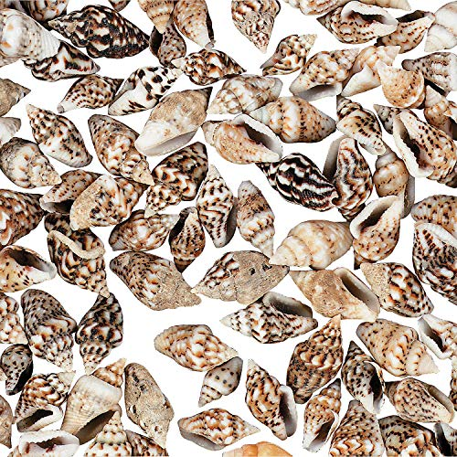 - Fun Express - Mini Natural Craft Shells (1lb) - Craft Supplies - Bulk Craft Accessories - Feathers and Shells - 1 Piece