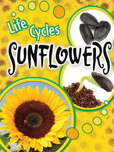 Sunflowers (Life Cycles)