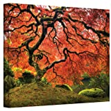 Art Walls Japanese Tree Gallery Wrapped Canvas by John Black, 24 by 32-Inch