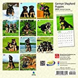 German Shepherd Puppies 2018 7 x 7 Inch Monthly Mini Wall Calendar, Animals Dog Breeds Puppies (Multilingual Edition)