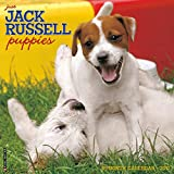Just Jack Russell Puppies 2017 Wall Calendar (Dog Breed Calendars)