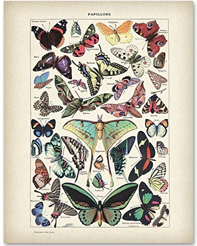Butterflies Art - 11x14 Unframed Art Print - Great Gift for Bathroom Decor - Personalized Butterfly Garden