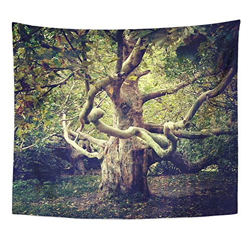 Emvency Tapestry Polyester Fabric Print Home Decor Green Forest Old Tree Sycamore Woods Magic Wall Hanging Tapestry for Living Room Bedroom Dorm 50x60 Inches ()