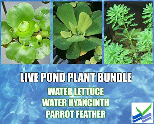3 Water Lettuce + 3 Water Hyancinth Bundle + 5 Parrot Feather Stem Plants - Floating Live Pond Plants