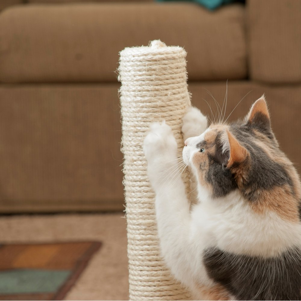 MyDearFavoriteCat Cat Scratching Post, for Small Cats and Kittens, Sisal Rope Covered Post with Sisal Ball