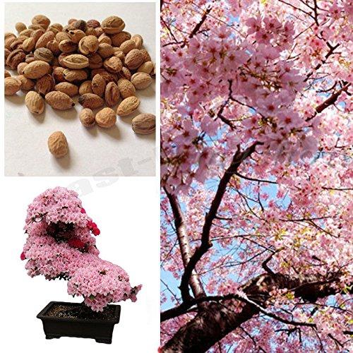 Pink Bonsai - 8