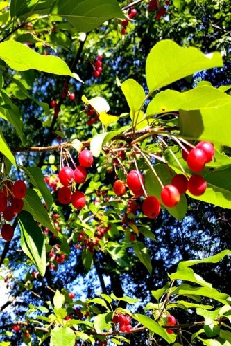 Journal Bright Red Berries Fall Branches: (Notebook, Diary, Blank Book) (Seasonal Fall Photo Journals Notebooks Diaries) ebook