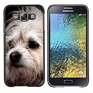 Bolognese Perro Mutt Piel Blanca canina- Metal de aluminio y de plástico duro Caja del teléfono - Negro - Samsung Galaxy E5 / SM-E500