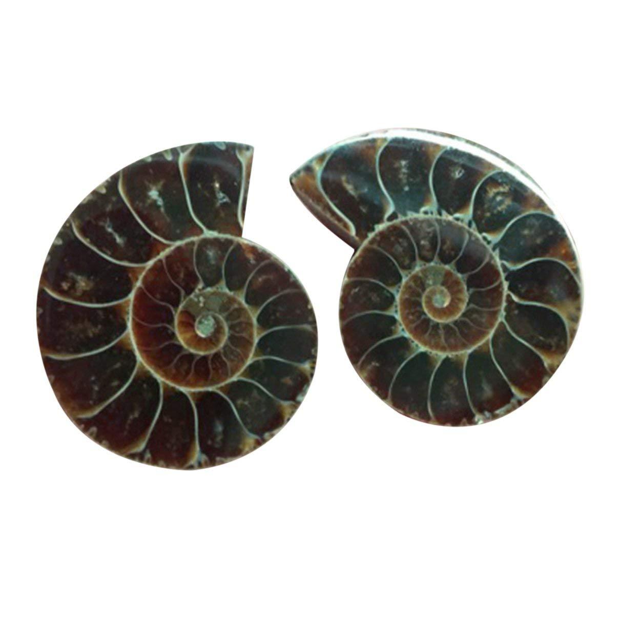 SaraHew74 1 Par Natural Amonita Esp/écimen F/ósil Concha Concha F/ósil Nautilus Oc/éano Jaspe Fish Tank Piedras Ornamento Decorativo