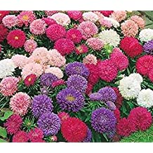 Giant Asters of California Mix Seeds - Approximately 1000 Seeds