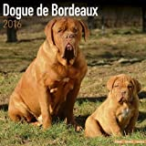 Dogue De Bordeaux Calendar - Breed Specific Dogue De Bordeaux Calendar - 2016 Wall calendars - Dog Calendars - Monthly Wall Calendar by Avonside